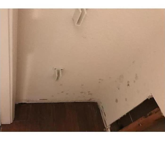 Mold Remediation Does Your Buena Park Home Have A Mold Problem?